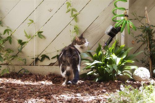 Charlie in the Garden 072609